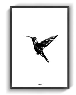 Kolibrien