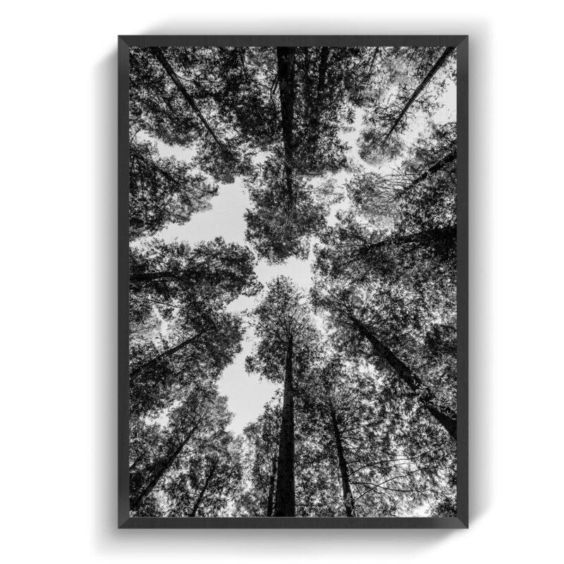 Magellan Træ