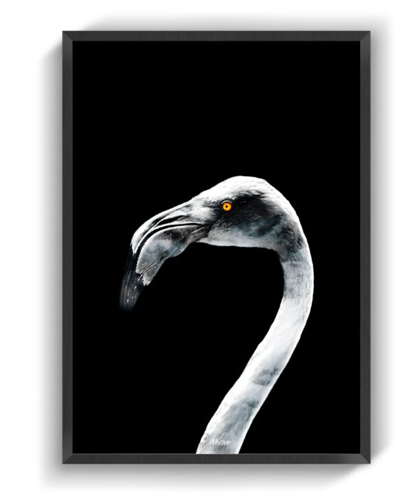 Beak & Peak