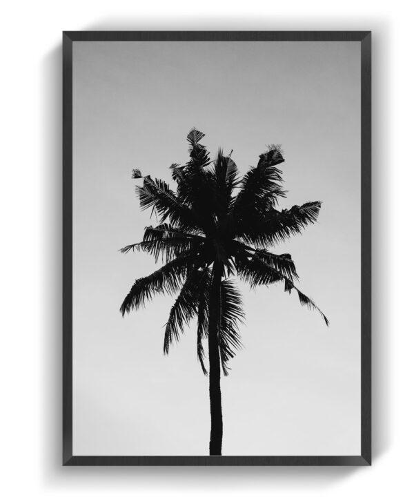 Amity Træ
