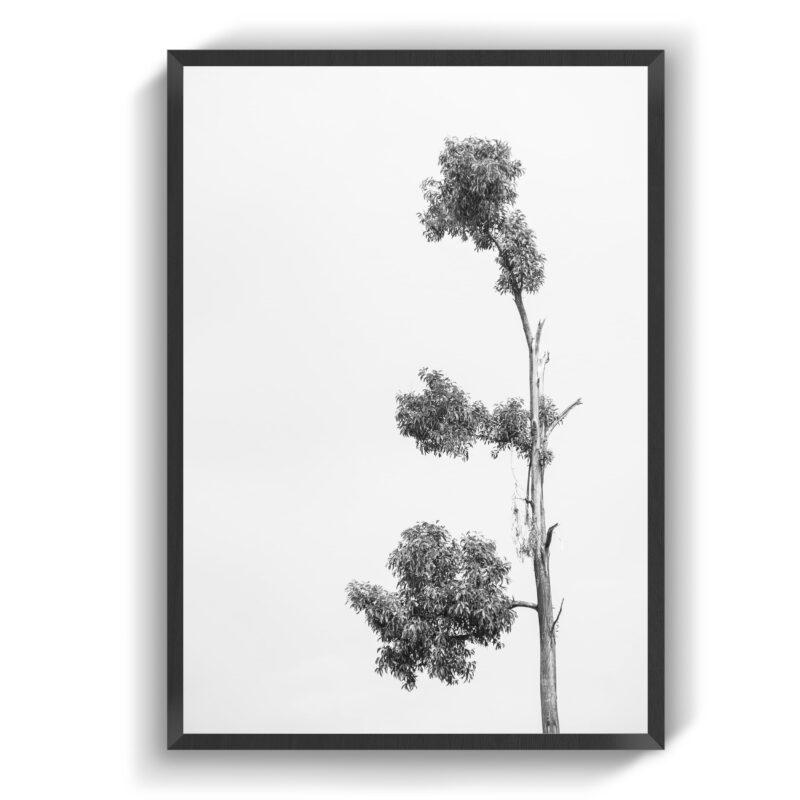 Stamp Træ
