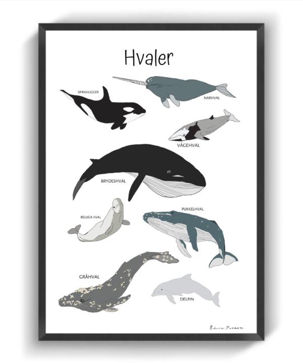 Hvaler II